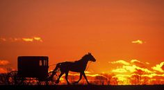 Lancaster County Pennsylvania, Pennsylvania Dutch Country, Amish, Yellow Black, Countryside, Sunset, Gallery, Outdoor, Image