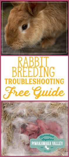 Rabbit troubleshooting guide when breeding rabbits, helpful tips and tricks from a pro. Meat Rabbits Breeds, Raising Rabbits For Meat, Rabbit Breeds, Rabbit Farm, Fox And Rabbit, Pet Rabbit, Silver Fox Rabbit, Silly Rabbit, Bunny Cages