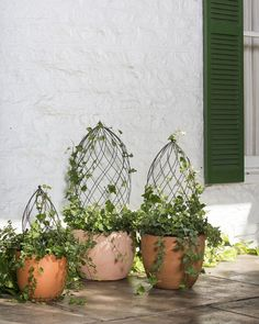 Twist Topiary Frame - Topiary Forms - Spiral Topiary Wire Frame