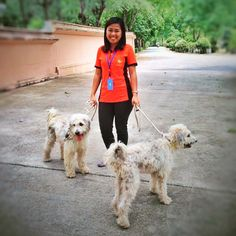 My first week with them...  Getting to know each other stage... #Labradoodles #Dogs #PetLover #Happiness