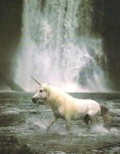 Unicorn & waterfall, double win
