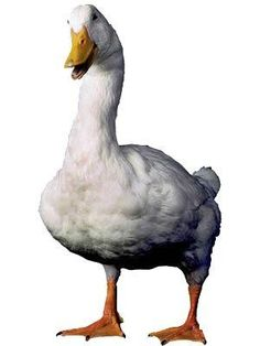 The mascot for Aflac Insurance Company is the Aflac Duck who became famous In 1999.