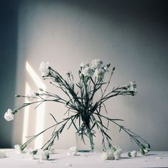 Flowers / photo by Lianggono Susanto