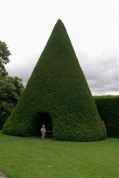 hollow cone shaped topiary