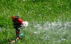 Cum să ai gazon verde toată vara. Cinci trucuri ușoare