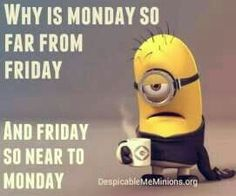 Cute Friday Minions Funny captions AM, Friday November PST - Humor Funny Minion Pictures, Funny Minion Memes, Funny School Jokes, Funny Disney Memes, Crazy Funny Memes, Really Funny Memes, Minions Quotes, Funny Facts, Funny Jokes