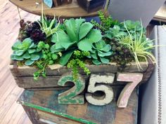 Faux succulents in a vintage seltzer bottle crated.