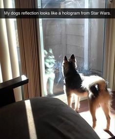 Dump A Day Attack Of The Funny Animals - 21 Pics