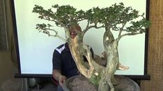 A Day in the Life of Bonsai Iligan: Transforming an Ugly Twin Tree - Published on Sep 2, 2015.  In this video I am working on a ugly material and transformed it into a beautiful twin tree with dead wood as feature. The works involve, pruning trimming, cleaning the trunks and branches using old toothbrush and water. Power Carving, applying Lime Sulfur. Wiring and lastly Potting to a bonsai Pot.