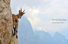Top Cover:Altopiano del Montasio - by Stefano Zocca