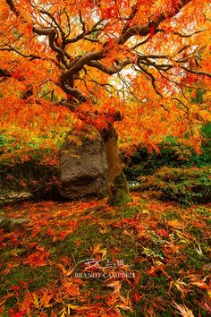 Autumn Ablaze by Brandt Campbell on 500px