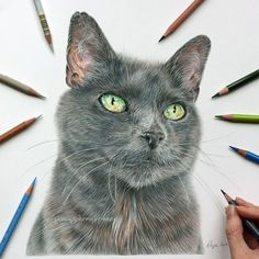 Sage the 13 year old Rescue Cat. A Pet and Wildlife Pencil Drawing Artist. By Angie.