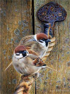 Painting by artist Andrew Hutchinson. Color Pencil Art, Bird Drawings, Bird Pictures, Little Birds, Wildlife Art, Bird Art, Beautiful Birds, Pet Birds, Painting & Drawing
