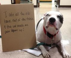 Dog Shaming features the most hilarious, most shameful, and never-before-seen doggie misdeeds. Join us by sharing in the shaming and laughing as Dog Shaming reminds us that unconditional love goes both ways. Funny Dog Memes, Funny Animal Memes, Funny Animal Pictures, Cute Funny Animals, Animal Humor, Funny Fails, Funny Pets, Animal Quotes, Cat Memes