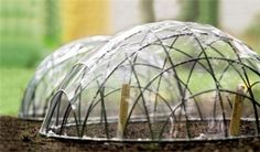 Creating your own Garden Cloche to protect your seeds, seedlings, plants from those late spring frosts Garden Crafts, Garden Projects, Diy Projects, Organic Gardening, Gardening Tips, Garden Cloche, Mini Greenhouse, Greenhouse Ideas, Cheap Greenhouse