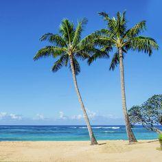 Coconut Palm Trees On The Hawaiian Beach By Elena Chukhlebova Print featuring the photograph Coconut Palm Trees On The Hawaiian Beach by Elena Chukhlebova #blue #palm #Artprint #Hawaii