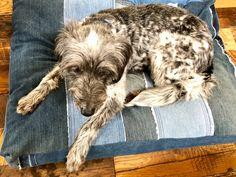 Denim jeans into Dog Bed! Etsy shop https://www.etsy.com/listing/593374495/custom-dog-bed-made-to-order-pet-bed