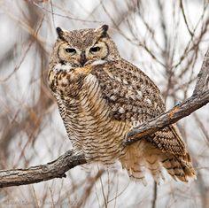 Owl photography by David Cramer - 2009