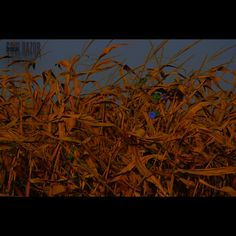MorningFlower #sunrise #canoncameras #canon #canonphotography #canon_official #photograhicart #photoshop #daybreak #symbolism #time  #insta_armagh #freedomthinkers #heatercentral #farm #corn #cornfield  #landscapephotography #landscape #nature #naturephotography #nature_shares #inspiration #featureshotz