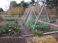doing a garden makeover or building from scratch? here are the tools you'll need by the cheap vegetable gardener