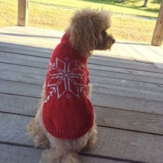 Charlie in the new Christmas sweater