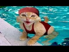 Gatos chistosos ( Funny cats) - YouTube (JUST LOVE THIS!!!!  ; )