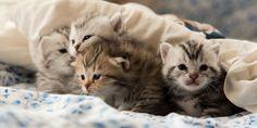 تحريم ما أحل الله في تنفير الناس من تربية القطط   داليويات علمية