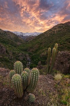 47 Mejores Imágenes De Paisajes De Chile En 2017 Chile Chilis Y