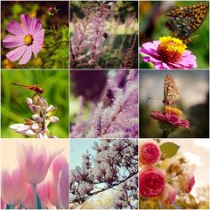 Hey, I found this really awesome Etsy listing at https://www.etsy.com/listing/236006115/flower-photo-set-set-of-9-flower-print