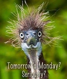 Community Post: 18 Cute Animals Having A Worse Hair Day Than You Animals And Pets, Funny Animals, Cute Animals, Funny Animal Faces, Crazy Animals, Funny Birds, Beautiful Birds, Animals Beautiful, Animal Pictures