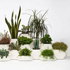 Skulpturale Töpfe für Zimmerpflanzen