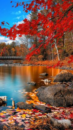 Autumn scene filled with lots of warm colours, and is contrasted by the cool blues of the water and sky.