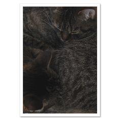 Fotokarte »Katzengeschwister« http://dickoepfig.ch/produkt/fotokarte-katzengeschwister/ #cat #katze