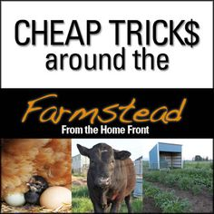 20 Great tips to save money and time around the farmstead! These ideas will be useful for even the experienced homesteader!  #homesteading #selfreliance