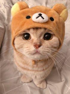 リラックマな猫がとても可愛い