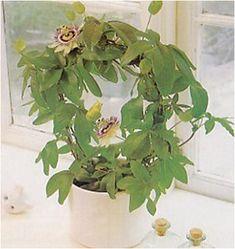 Floral Wreath, Wreaths, Plants, Gardening, Decor, Floral Crown, Decoration, Door Wreaths, Lawn And Garden
