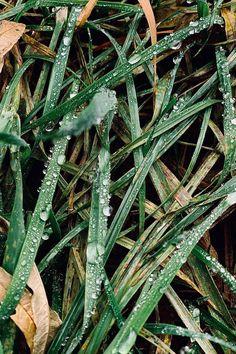 phone screen savers Nine 1 Plant Leaves, Phone, Plants, Telephone, Plant, Mobile Phones, Planets