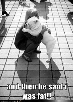 funny dog pictures - and then he said i was fat!! My dog is very chunky and I always need a hug after someone tells me she is fat :( I do not hold it against her that she loves the couch and air conditioning more then life itself. The plumper she gets, the better pillow she makes :)