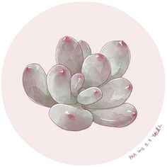 Succulent Succulents Drawing, Cactus Drawing, Watercolor Succulents, Watercolor Flowers, Watercolor Paintings, Painting & Drawing, Botanical Illustration, Botanical Prints, Watercolor Illustration