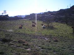 http://acomeredormir.blogspot.pt/2013/03/trilho-da-calcedonia-geres.html
