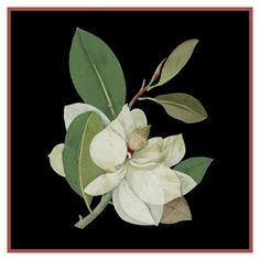 Magnolia Flower by Mary Delany Counted Cross Stitch or Counted Needlepoint…