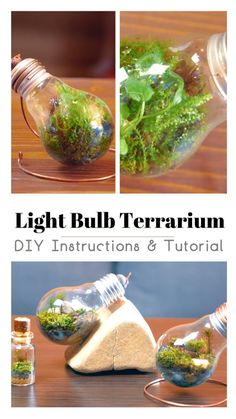 HOW TO MAKE AN ETERNAL TERRARIUM – Neesly
