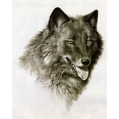 Black Wolf Sketch ❤ liked on Polyvore featuring wolves, animals, wolf, backgrounds and fillers