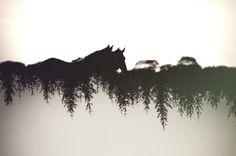 Minor Trees by Callum Baker on 500px