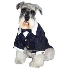 Terno Super Chic Dear Dog. #petmeupet #chapeu #fantasia #fantasiaparacachorro #carnaval #promocao #desconto #cachorro