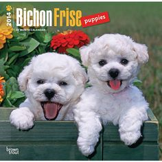 Bichon Frise Puppies 2014 Wall Calendar | | DogBreedStore.com