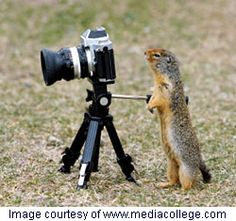 wonder what the little guy is taking a picture of?