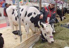 Наши бурёнки покорили москвичей http://www.agroxxi.ru/zhivotnovodstvo/stati/nashi-buryonki-pokorili-moskvichei.html  «Золотая осень» – главный аграрный форум страны, в этом году он прошёл уже в 18-й раз. С 5 по 8 октября полторы тысячи предприятий из 64 регионов России и 13 стран представили свою сельхозпродукцию на суд жюри и посетителей. Экспозиция разместилась сразу в двух павильонах и на нескольких открытых площадках на территории ВДНХ