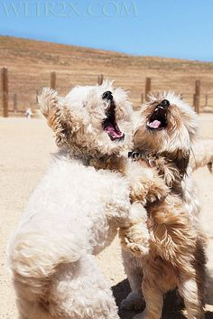 Best friends? Partners in crime? Singing puppies!