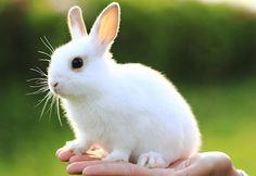 Stunning rabbit